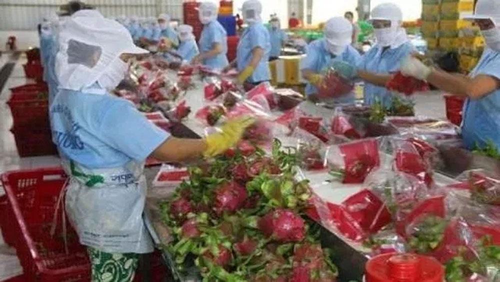 Điều tiết sản lượng nông sản tránh dịch Covid-19
